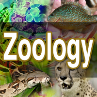 Zoology school subjet